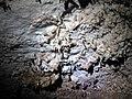 70F Helictites 5 (8324762141).jpg