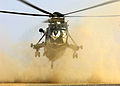 845 Squadron Seaking Lands in Desert During Exercise MOD 45139540.jpg