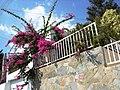 A@a. Ag. Tyhonas village Limassol - panoramio (3).jpg