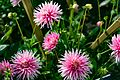 ADD SOME COLOUR TO YOUR LIFE (FLOWERS IN A PUBLIC PARK)-120116 (29194466461).jpg