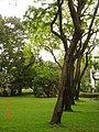 AIT - panoramio - Seksan Phonsuwan (75).jpg