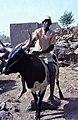 ASC Leiden - W.E.A. van Beek Collection - Dogon lifestock 04 - Apomi Saye on the pack oxen of his father, Tireli, Mali 1980.jpg