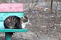 A feral cat in Krasnodar, Russia-2010-03-27.jpg