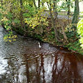 A heron in the Water of Leith at Murrayfield. (8121562926).jpg