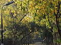 A lone street in Autumn, New Delhi.jpg