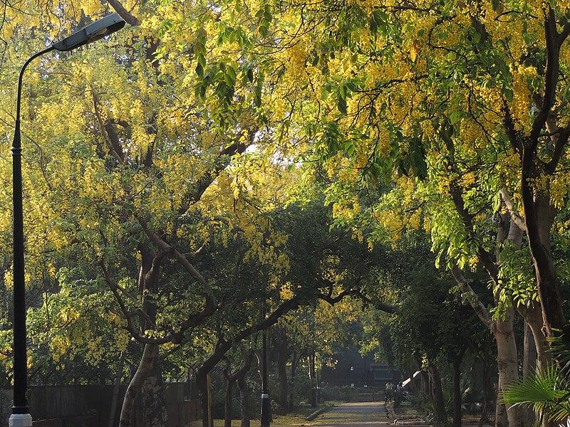 File:A lone street in Autumn, New Delhi.jpg