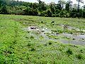 A swampy landscape towards limestone cave.jpg