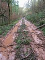 A very wet forest track, Slade Bottom, St Briavels - geograph.org.uk - 286052.jpg