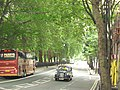 Abingdon Street, London - DSC08128.JPG