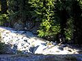 Above Fryingpan Creek - Flickr - brewbooks.jpg