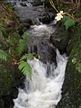 Afon Criw - geograph.org.uk - 306081.jpg