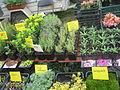 AgroBalt 2012 - augalų turgelis.JPG