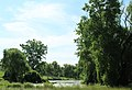 Algae-Covered Pond, Farrell Road, Webster Township, Michigan - panoramio.jpg