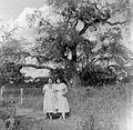 Algaroba tree, Chaco Argentina (7094142479).jpg