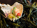 Alinea 2012 - King Crab (7302701818).jpg