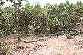 Alto Araguaia - State of Mato Grosso, Brazil - panoramio (1088).jpg