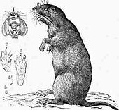 Drawing of gopher on its haunches, with inset drawings of mouth, paws and nails