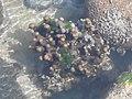 Amazing Fingure Corals.jpg