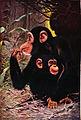 Americana 1920 Chimpanzee.jpg