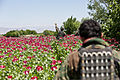 An Afghan National Army platoon sergeant with the 3rd Tolai, 1st Special Operations Kandak shouts at a villager during a patrol through a poppy field during a clearing operation in the Khogyani district 130509-A-IS772-130.jpg