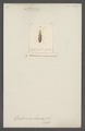 Ananca - Print - Iconographia Zoologica - Special Collections University of Amsterdam - UBAINV0274 028 13 0009.tif
