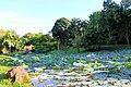 Ang Mo Kio Town Garden West Singapore - panoramio (1).jpg