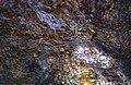 Angel's Madagascar Frog (Boehmantis microtympanum) (9631508946).jpg