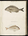 Animal drawings collected by Felix Platter, p1 - (72).jpg