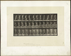 Animal locomotion. Plate 537 (Boston Public Library).jpg