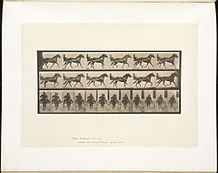 Animal locomotion. Plate 594 (Boston Public Library).jpg