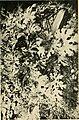Annali di botanica (1923) (18411514655).jpg