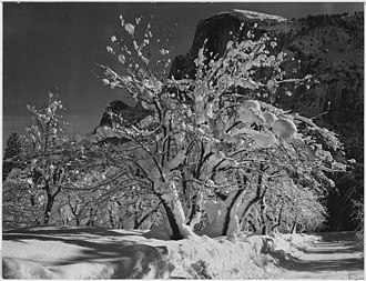 Group f/64 - Ansel Adams: Half Dome, Apple Orchard, Yosemite trees with snow on branches, April 1933