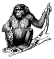 Ape1 (PSF).png