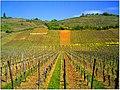 April Patina Vosges Die Vogesen France - Master Alsace magic Elsaß Photography 2014 Color de Vins - panoramio.jpg
