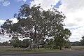 Apsley NSW 2820, Australia - panoramio (44).jpg