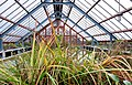 Aquatic plants at the Oude Hortus in Utrecht (b).jpg