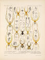 Arachnida Araneidea Vol 1 Table 18.jpg