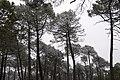 Arboles blancos - panoramio.jpg