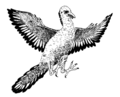 Archaeopteryx (PSF).png