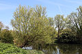At the River Lee, Fishers Green, Lee Valley, Waltham Abbey, Essex, England 06.jpg