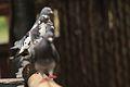 Austin Roberts Bird Sanctuary-063.jpg