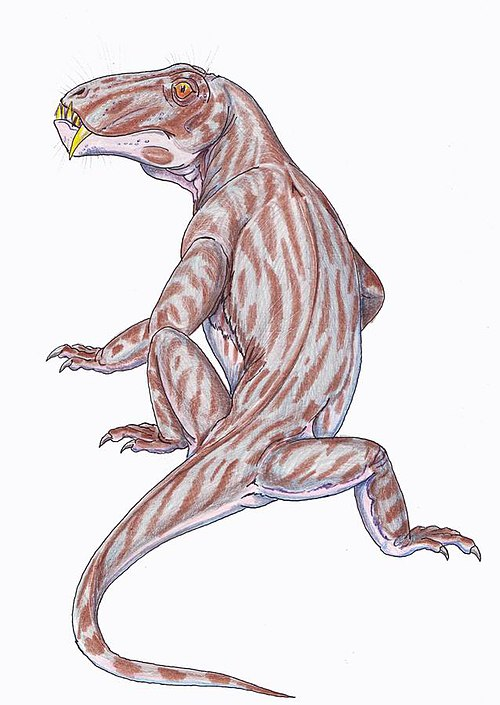 Australosyodon