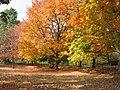 Autumn on the Indiana University campus.jpg