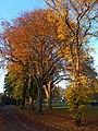 Autumnal Sutton Green, SUTTON, Surrey, Greater London - Flickr - tonymonblat.jpg