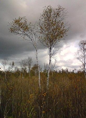 Avaste Nature Reserve - Image: Avaste soo