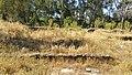 BA-Ruinas villa romana Pesquero. 07.jpg