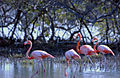 BONAIRE FLAMINGO SANCTUARY.jpg