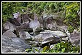 Babinda Boulders-01 (4192428768).jpg