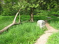 Bachelors Grove 2008 tree 2.jpg