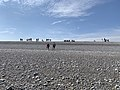 Baie Somme Hourdel - Cayeux-sur-Mer (FR80) - 2021-05-29 - 21.jpg